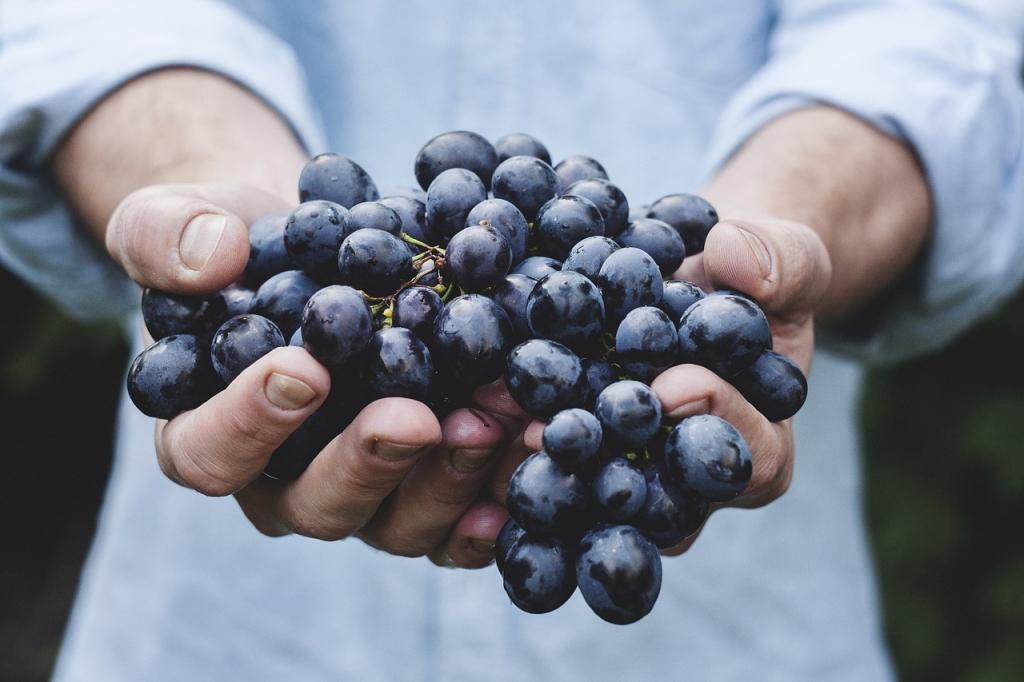 Przepis na nalewkę z winogron
