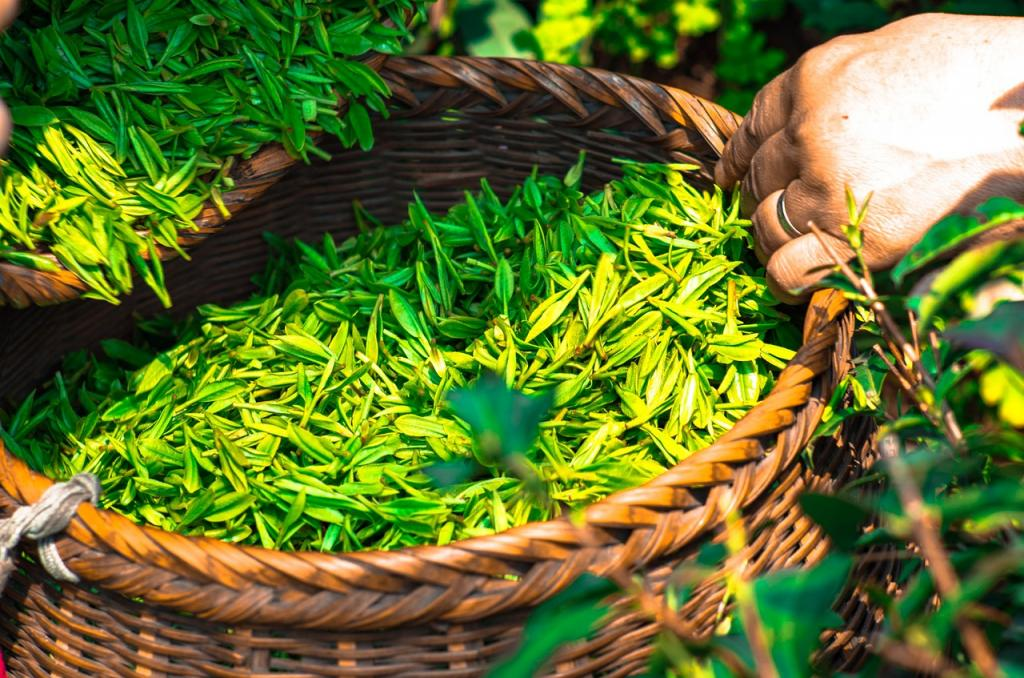 Przepis nanalewkę zzielonej herbaty